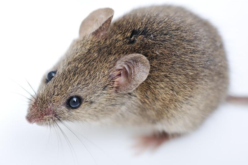 Mouse control Doncaster