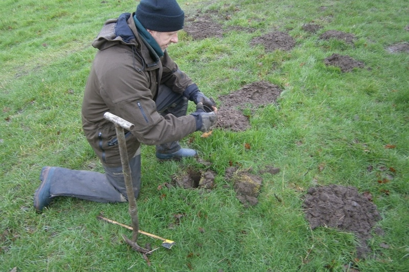 Mole control in Doncaster