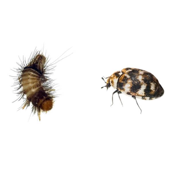 Textile pest control