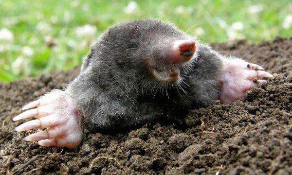 mole control Doncaster area