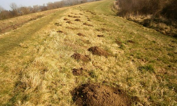 Mole control Doncaster