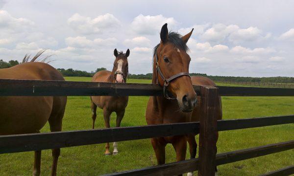mole control horse paddocks
