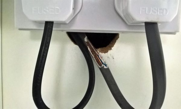 Rat chewing wires