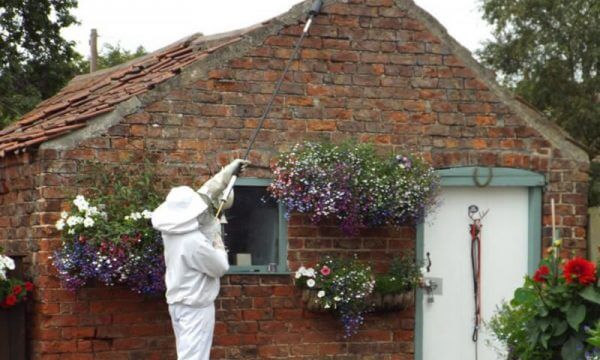 Treating wasps nests