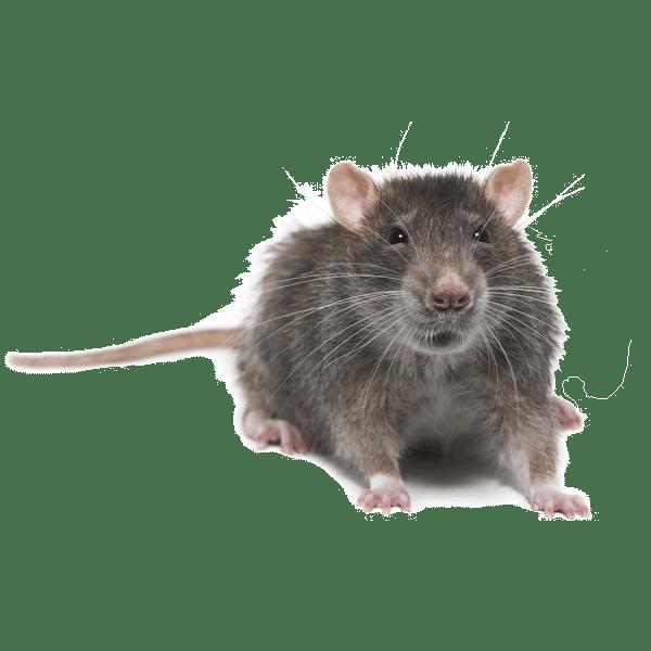 rat mouse control doncaster