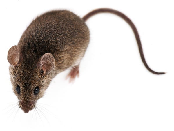 Farm Mouse control