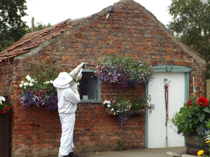 Treating wasp nest