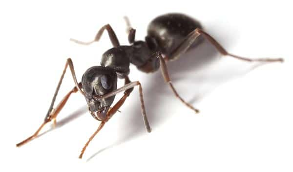 Ant control Doncaster