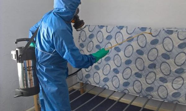 bed bug control doncaster