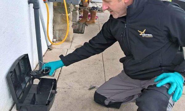 Rat removal Doncaster
