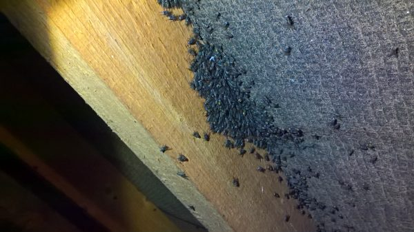 cluster-flies-in-loft