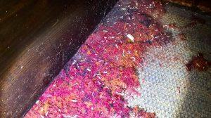 clothes moth damage