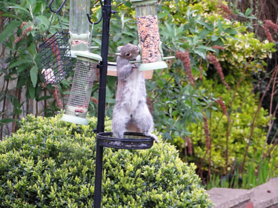 Squirrel control Doncaster