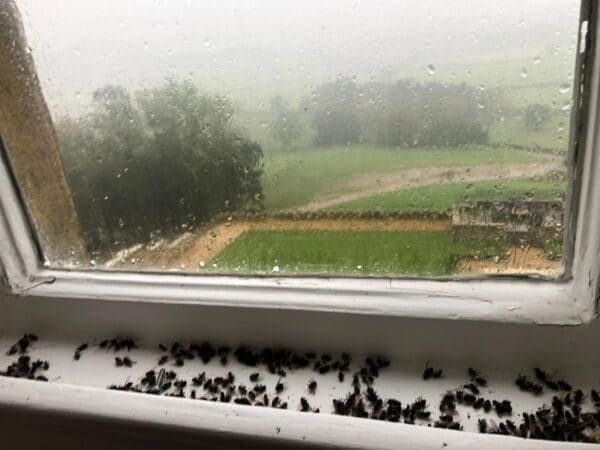cluster fly in windows